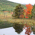 Indian Summer Acadia Park by Christiane Schulze Art And Photography