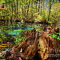 Indian Summer At Buford Spring by Barbara Bowen