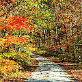 Indiana Back Road by Lorna R Mills DBA  Lorna Rogers Photography