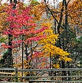 Indiana Fall Color by Alan Toepfer