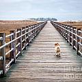 Infinite Boardwalk Run by DAC Photography
