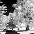 Infrared Delight by Paul W Faust -  Impressions of Light