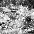 Infrared Forest by Frank Lee Hawkins