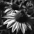 Infrared - Lucky Star by Pamela Critchlow
