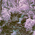 Infrared Mountain Stream by Paul W Faust -  Impressions of Light
