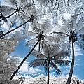Infrared Palm Trees On The Coast by Jason Chu