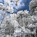 Infrared Pond And Reflections 2 by Jason Chu