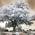 Infrared Tree On A Hill In Gettysburg by Paul W Faust -  Impressions of Light