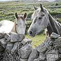 Inishmore Horses by Danielle Summa