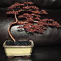 Inna's Tree 2012 by Aleksandr Rakhlin