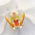 Inner Beauty Of An Orchid by Julie Palencia