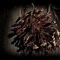 Inner Pine Cone by Charles Majewski