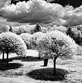 Innisfree Garden by Claudia Kuhn