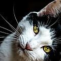 Inquisitive Kitty by Cheryl Baxter
