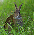 Inquisitive Rabbit Watching You by Inspired Nature Photography Fine Art Photography