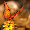 Insect - Butterfly - Just A Bit Of Orange  by Mike Savad