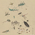 Insects C1825 by Granger