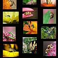 Insects Collage by Dianna Wilson