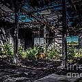 Inside An Abandon Building by Ronald Grogan