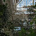 Inside Beautiful Old Greenhouse by Frank Gaertner