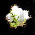 Inside Looking Out by Sandra De Boer