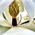 Inside Magnolia by Susan Garren