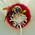 Inside The Flower by Paulette Thomas