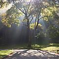 Inspirational Scene Sun Streaming Fog Square by Kari Yearous