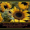 Inspirational Sunflowers by Carolyn Marshall