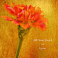 Inspirational Words All You Need Is Love by Carol F Austin