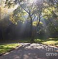 Insprirational Scene Sun Streaming Through Fog by Kari Yearous