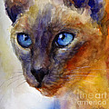 Intense Siamese Cat Painting Print 2 by Svetlana Novikova