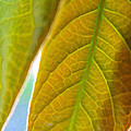 Interesting Leaves - Digital Painting Effect by Rhonda Barrett