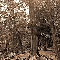Interesting Tree by Stephanie Hanson