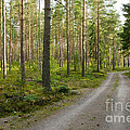 Into The Forest by Kennerth and Birgitta Kullman