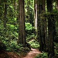 Into The Magical Forest by Michelle Calkins