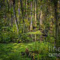Into The Swamp by Barbara Bowen