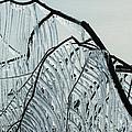Intricate Ice Curtains by Georgia Mizuleva