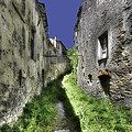 Invasive Vegetation In The Main Street Of The Abandoned Village by Enrico Pelos