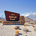 Inyo National Forest Sign by Priya Ghose
