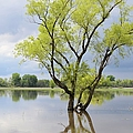 Iowa Flood Plains by Bonfire Photography