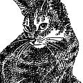 iPhone-Case-Cat6 by Gordon Punt