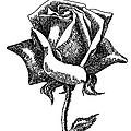 iPhone-Case-Flower-Rose1 by Gordon Punt