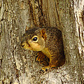 iPhone Squirrel In A Hole by Robert Frederick