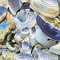 Iridescent Shells II by Christiane Schulze Art And Photography