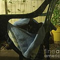 Irina Lounging On A Chair by Julia Hanna
