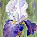 Iris     by Irina Sztukowski