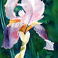 Iris 1 by Marilyn Jacobson