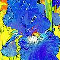 Iris 10 by Pamela Cooper