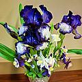 Iris #16 by John Derby
